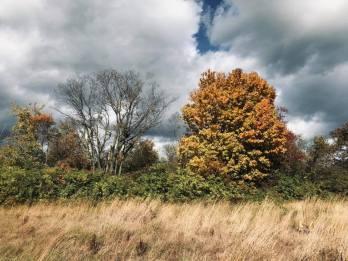 fall stroll 3